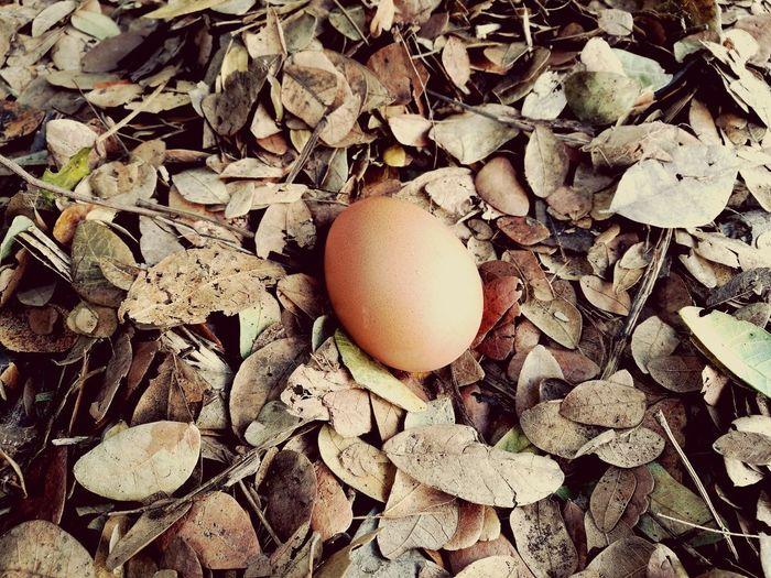 Egg Full Frame Egg Eggshell Backgrounds Close-up Animal Egg Nest Chick Nest Egg
