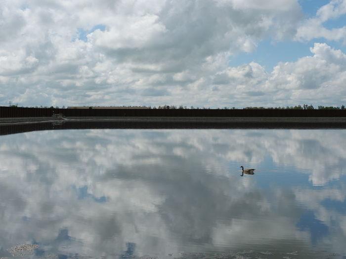Wastewater Bird Water Lake Reflection Reflecting Pool Tree Sky Cloud - Sky Landscape Reflection Lake Water Bird