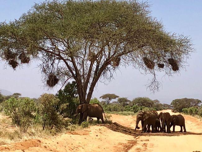 Tree Animal Themes Elephant Animals In The Wild Mammal Animal Wildlife Nature
