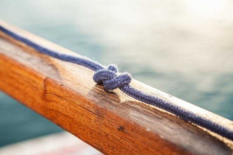 Close-up of lizard on railing