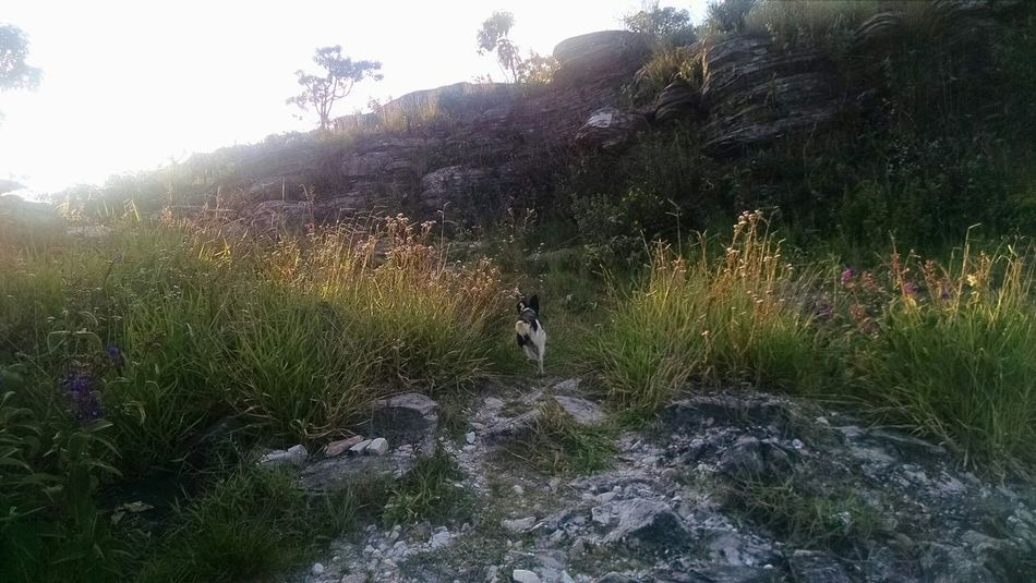 RePicture Travel Nature_collection Beautiful Nature Naturelovers Trip Brazil Montains    Dog Love