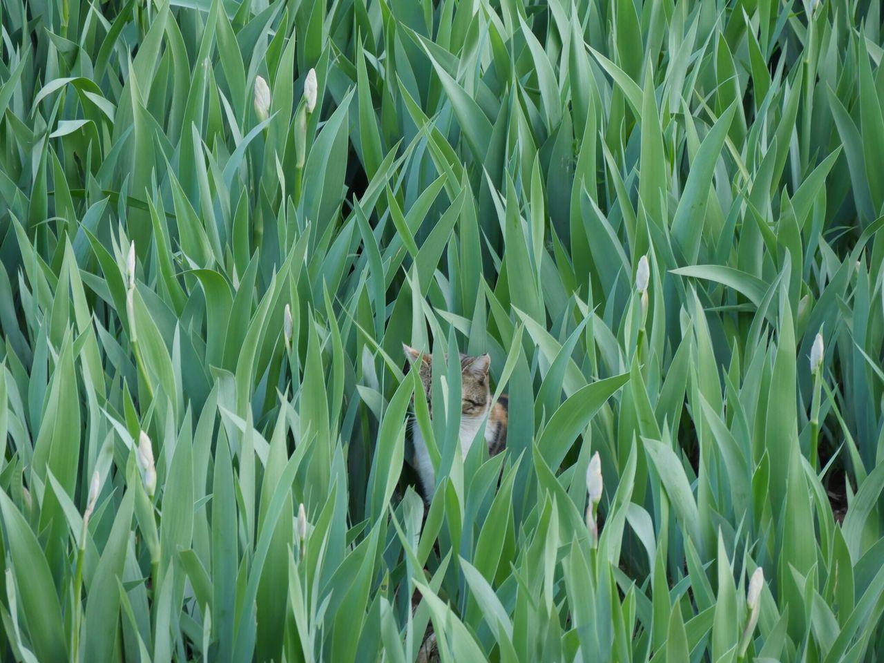 Crops Growing In Field