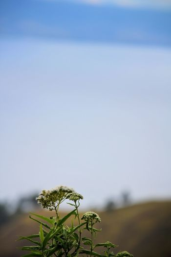 Close-up of plant growing on land against sky