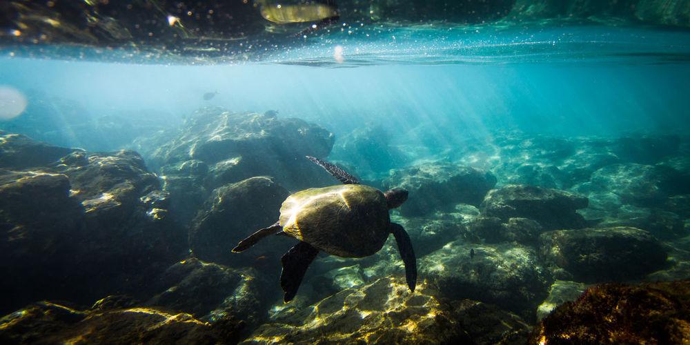 Tortoise Swimming In Sea
