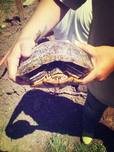 My Ex Turtle