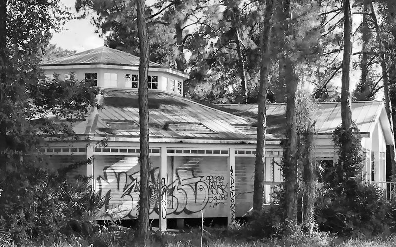 Foreclosed-Urban Makeover. Tree Built Structure Architecture Building Exterior House Branch Day Outdoors Tranquil Scene No People Scenics Tranquility Remote Solitude EyeEmBestPics EyeEm Nature Lover EyeEm EyeEmbestshots Eyeemphotography EyeEm Best Shots Fresh On Eyeem  EyeEm Gallery EyeEm Best Edits Architecture And Art Home Is Where The Art Is