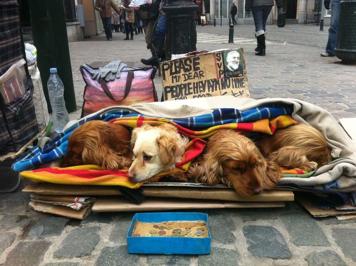 Dogs sleeping on street