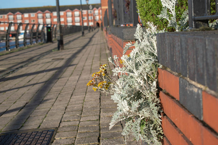 Plants growing on footpath by railing