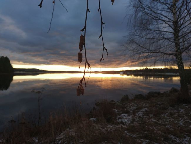 Reflection Water Tree Sunset Lake Nature Landscape Sky Cloud - Sky Outdoors No People Reflection Lake Beauty In Nature Middle Of Sweden Hälsingland November Norrland Varpen Sverige Bollnäs Lake Varpen