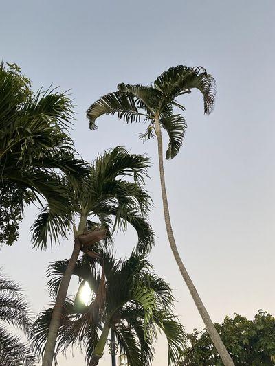 Nice trees Palm
