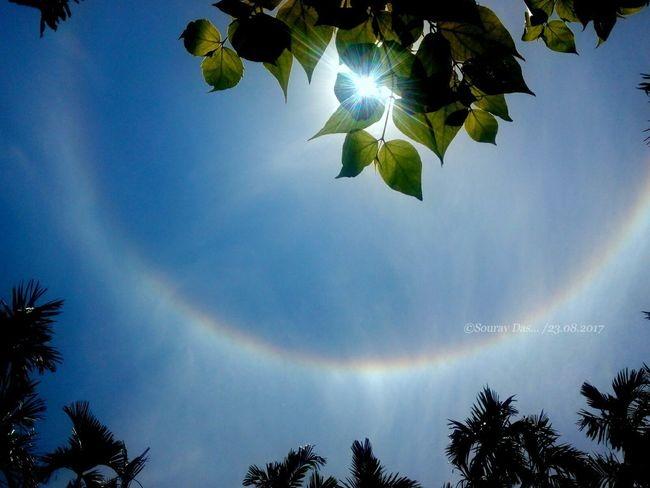 Sun Halo The circular rainbow around sun ... Circular Rainbow Rainbow🌈 Sun Sun Behind The Leafs Green Leaf, Fresh And Beautiful Leaf Low Angle View Sky Illuminated Beauty In Nature Tree Branch Nature The Week On EyeEm Green Leaves Likeforlike EyeEm Team Beauty In Nature Indianphotography Green Color Like4like India Colours Of India