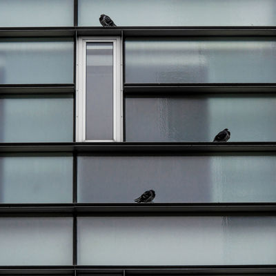 Architecture & Pigeons Posing Abstract Animal Themes Animals In The Wild Architecture Bird Composition Day Indoors  Minimalism Nature No People Urban Geometry Window The City Light Minimalist Architecture Minimalz