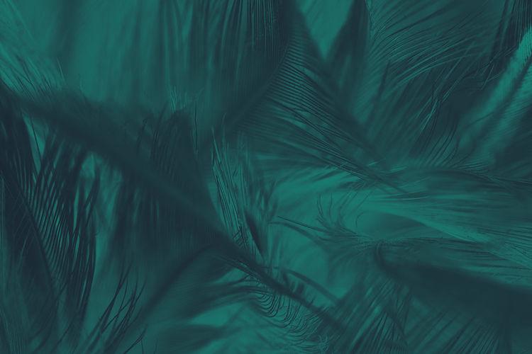 Beautiful macro close up dark green blue azure feather pattern texture background