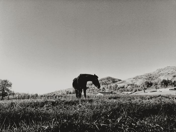 View of a horse on field