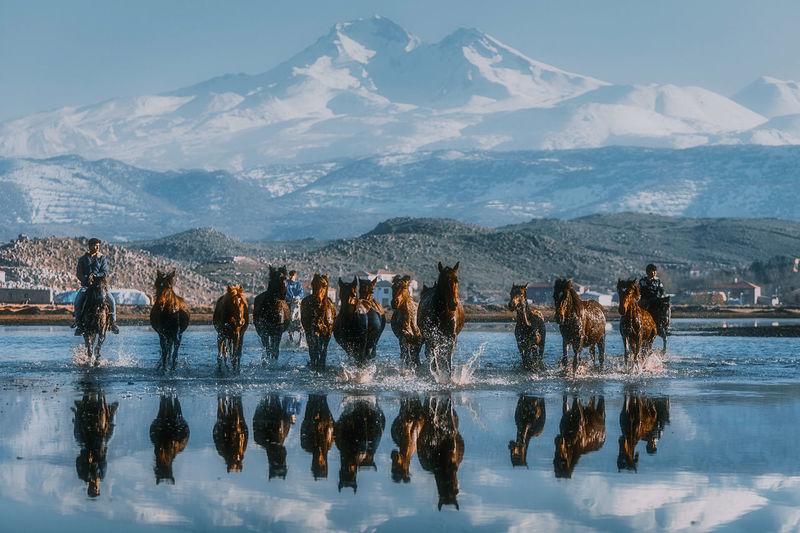 Reflection of horses seen in water against sky