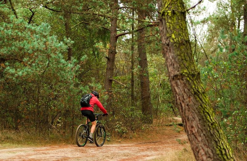 Rear view full length of person riding bicycle by trees at forest