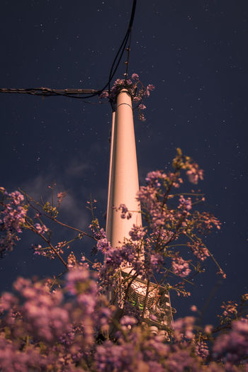 Plant Nature No People Growth Low Angle View Tree Flower Flowering Plant Night Built Structure Architecture Sky Tower Technology Outdoors Beauty In Nature Building Exterior Fuel And Power Generation Illuminated Tall - High