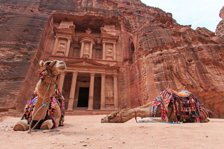 Camels sitting against old building