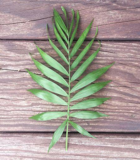 Missed a few days. Growth Plant Leaf IPhoneography Mobilephotography Project365 Project 365 Project366 Photo365 Mobile Photography Iphoneonly IPhone