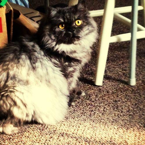 My Cat Gizmo!:)