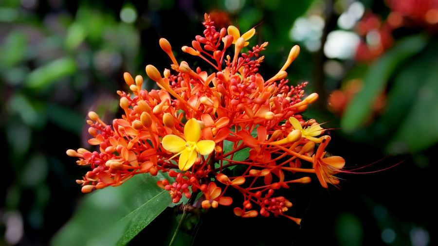 Flower Flowering Plant Freshness Beauty In Nature Growth Petal Flower Head Plant Focus On Foreground Nature Inflorescence Orange Color Outdoors Park Pollen Bunch Of Flowers Close Up Pattern Colorful Wildlife Forest Texture Object Art EyeEm Nature Lover