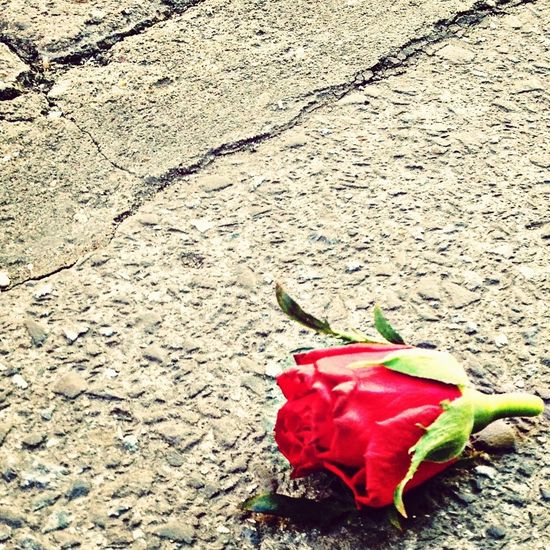 They are not long, the days of wine and roses..