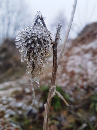 winter is