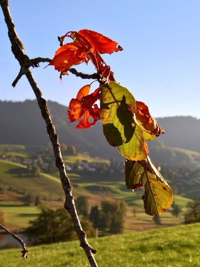 Grass Tranquility Autumn Beauty In Nature Change Close-up Day Focus On Foreground Fragility Leaf Mountain Nature No People Outdoors Sky Swiss Swiss Alps Swiss Mountains Switzerland Tranquil Scene Tree Try