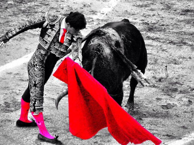 Spain bull fight