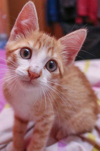 View Of Kitten In Bedding