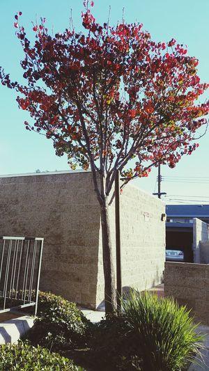 Nature EyeEm Arias_photography Morning Tree Photography Gs5 Samsung Galaxy Camera SamsungS5 Buildings