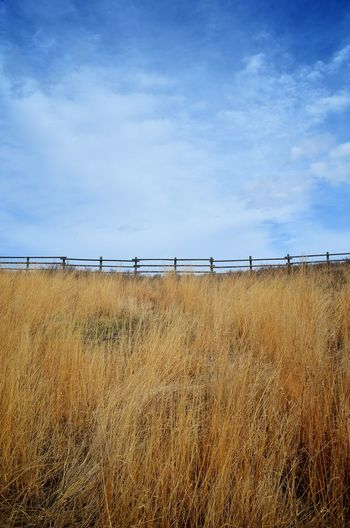 Fence meets sky in the prairies near Calgary, Alberta, Canada. Alberta Beauty In Nature Calgary Calgary, Alberta Canada Cloud - Sky Cochrane Copy Space Day Field Grass Grassland Landscape Nature No People Outdoors Prairie Rural Scene Sky Symmetry Tall Grass