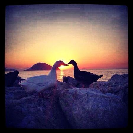 Vakvakların Aşkı :)
