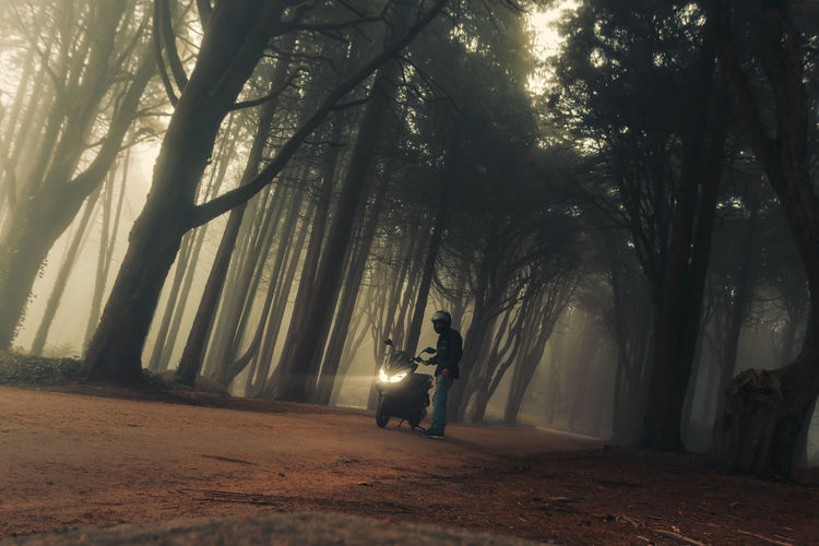 Man amidst trees in forest