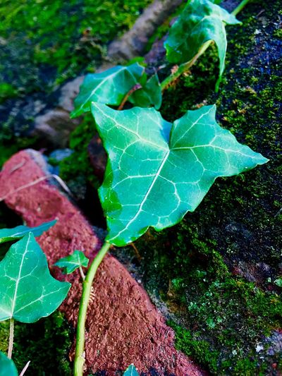 Leaf Plant Part Plant Growth Nature Green Color Close-up Beauty In Nature