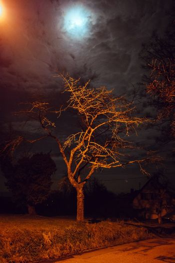 Gaiberglichter Street Light Scenics Moody Sky Atmospheric Mood darkness and light Moon Night Sky Night Lights Night Nightphotography Night Tree Tranquility Moon Bare Tree Illuminated Outdoors Nature No People Moonlight Beauty In Nature Sky Branch Lone