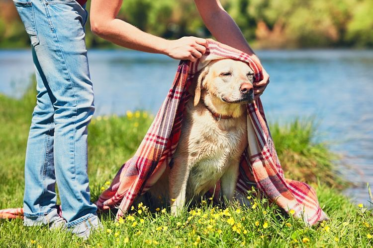 Low Section Of Woman Covering Dog