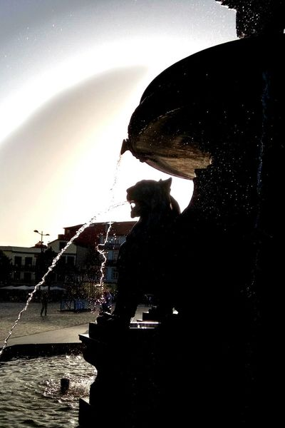 Lions by dusk Sculpture Water Statue Fountain Flowing Water Splashing Sunbeam Porto. Eyemporto