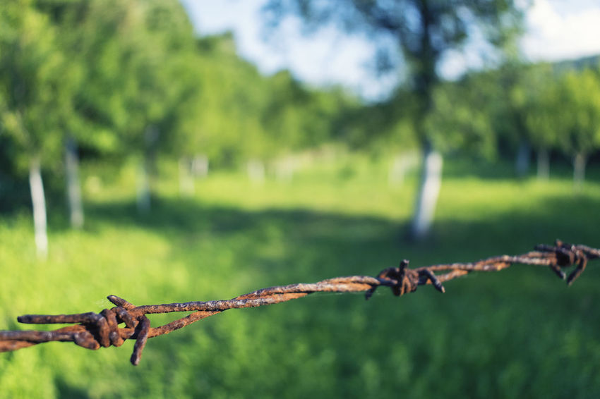Closeup barbed wire fence Barbed Fence Barbed Wire Blurred Background Close-up Day Focus On Foreground Grass Green Color Growth Man Made Structure Metal Metal Barriers Nature Nature Border No People Outdoors Protection Rusty Rusty Fence Safety Sky Tree