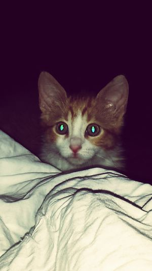 Cute Pets Cat♡ Je L'aiiiime❤ Tigrou Chat Animals Eyes Extraterrestre Oo