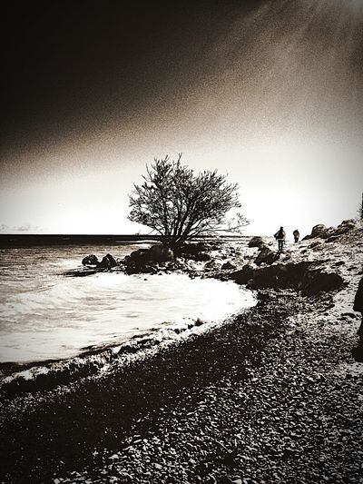 Nature Check This Out Enjoying Life Trees Blackandwhite Light And Shadow EyeEm Nature Lover EyeEm Best Shots