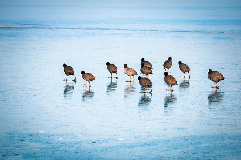 Flock of birds at beach
