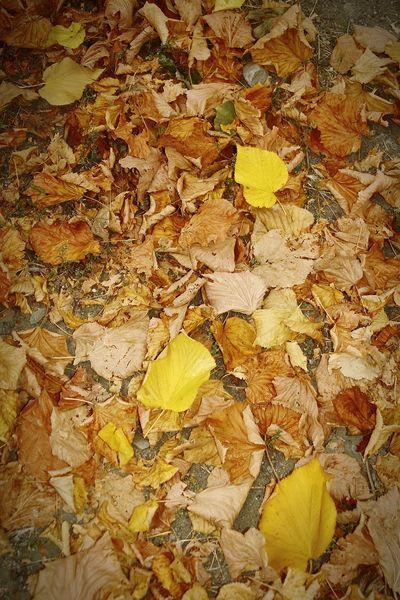 Autumn Yellow Rossiglione 3XSPUnity 3XSPhotographyUnity 3XPUnity Foglieautunnali
