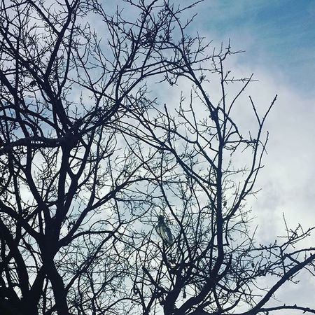 Trees in Kabul Afghanistan after heavy Rain Nature Sky
