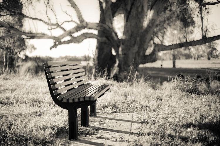 Park Bench in Dubbo NSW Australia Australia Beauty In Nature Bench Blackandwhite Chair Dubbo Grass Outdoors Parkbench Tree
