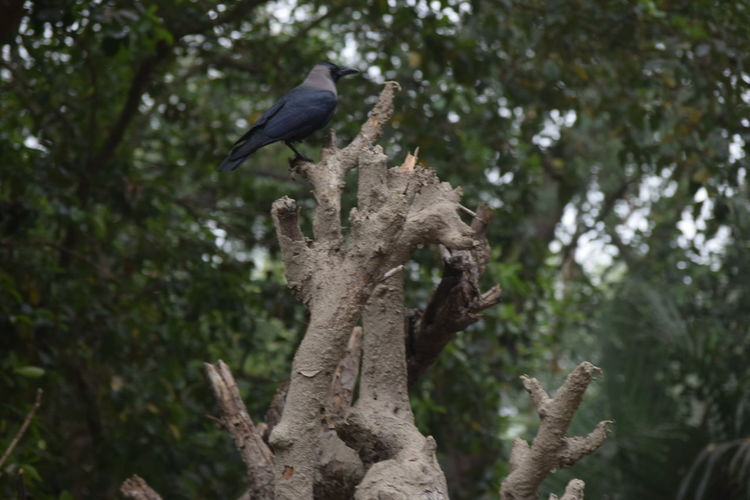 Bird Of Prey Bird Perching Tree Branch Raven - Bird Vulture Sky