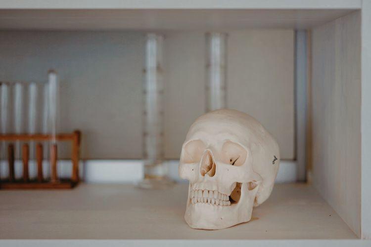 Indoors  Bone
