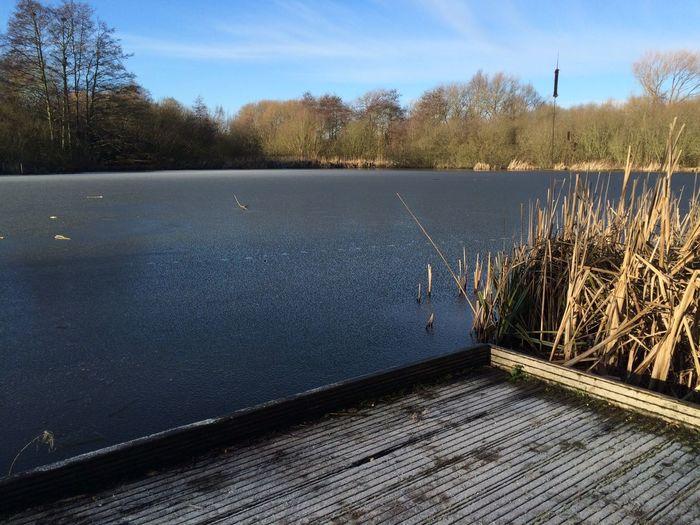 Nottingham Ice Winter Martin's Pond Nottinghamshire Wildlife Trust