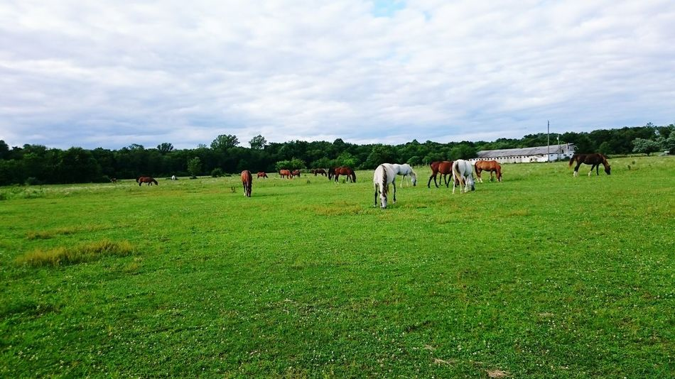 First Eyeem Photo Horses Family Farm Farming Pony Ponies Horsepeople Horsepower Equestrian Equestrianlifestyle