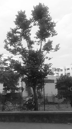 Tree in my